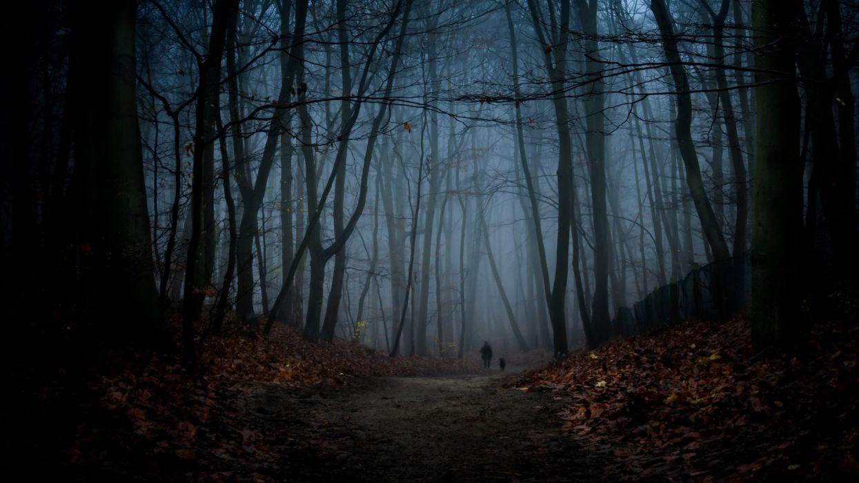 forest tree landscape nature autumn dark fog wallpaper
