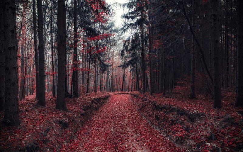 forest tree landscape nature autumn road wallpaper