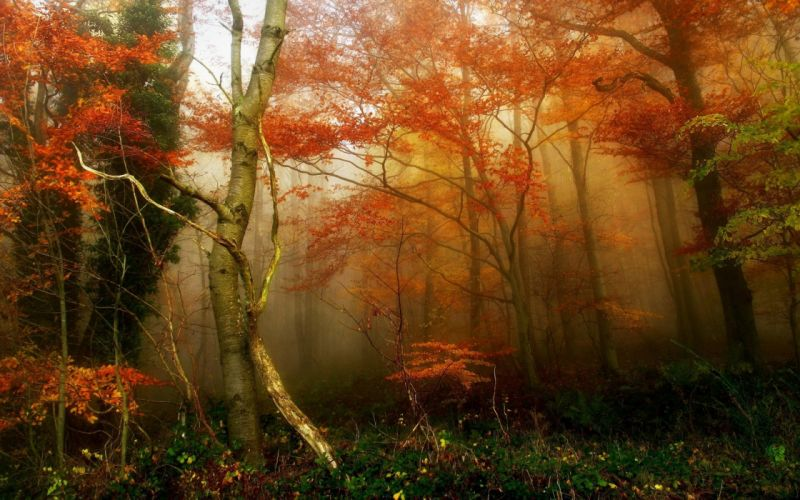 forest tree landscape nature autumn wallpaper