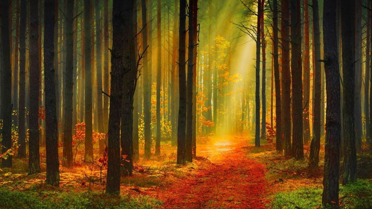 forest tree landscape nature autumn road path trail wallpaper
