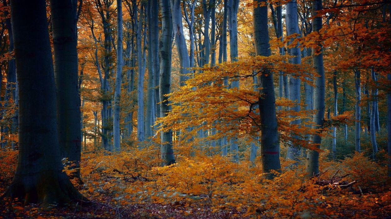 forest tree landscape nature autumn road path trail wallpaper
