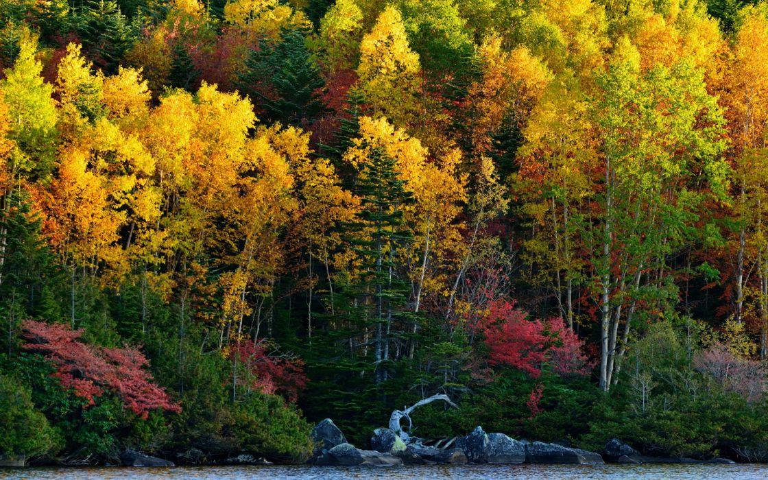 forest tree landscape nature autumn wallpaper