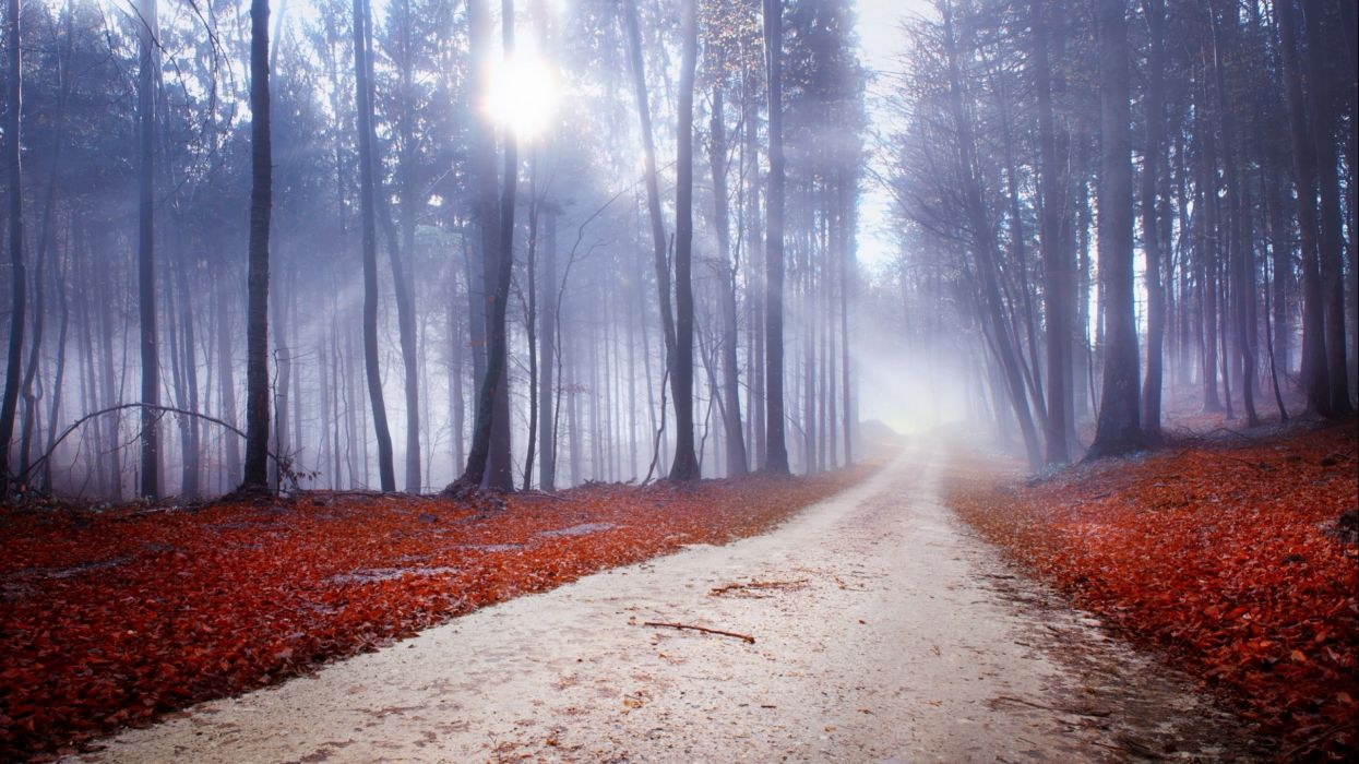forest tree landscape nature autumn path trail road wallpaper