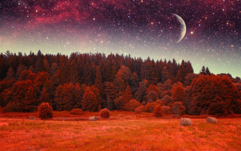 forest tree landscape nature autumn sky night stars fantasy moon wallpaper