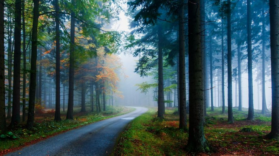 forest tree landscape nature autumn road wallpaper
