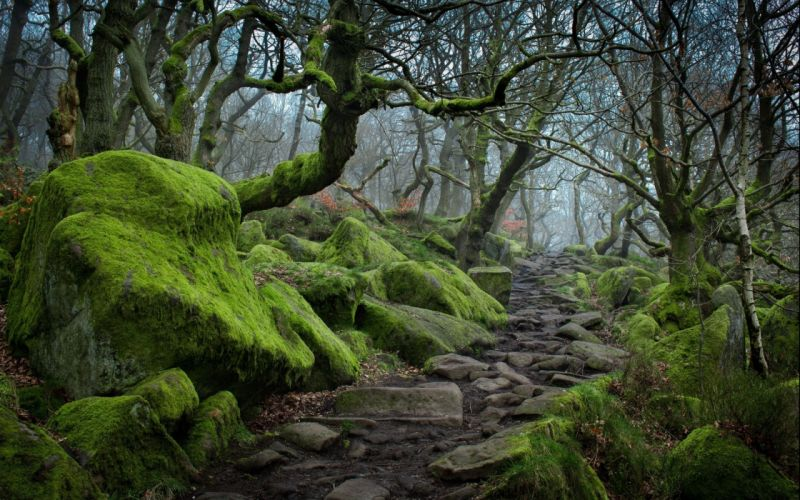 forest tree landscape nature moss wallpaper