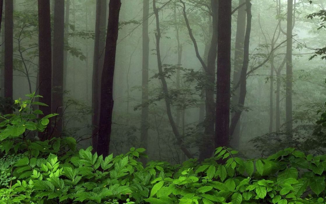 forest tree landscape nature wallpaper