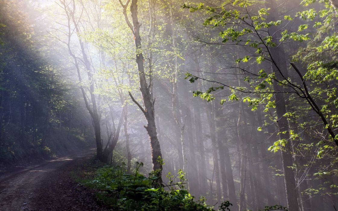 forest tree landscape nature autumn path fog wallpaper