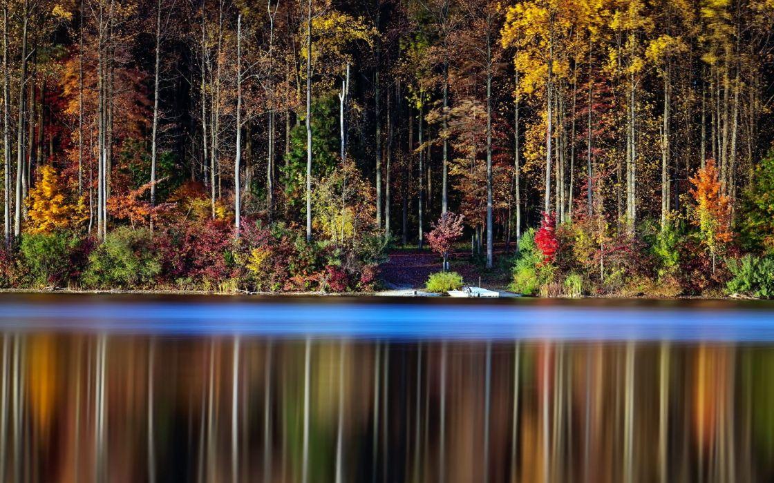 forest tree landscape nature autumn reflection lake wallpaper