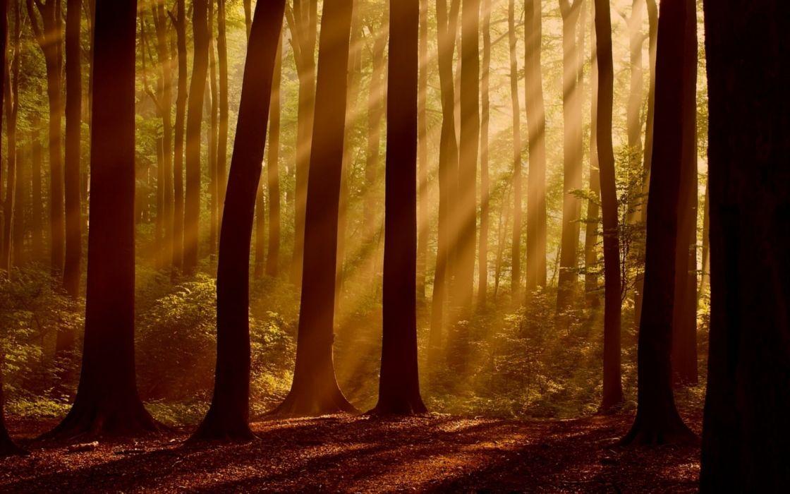 forest tree landscape nature autumn fog wallpaper