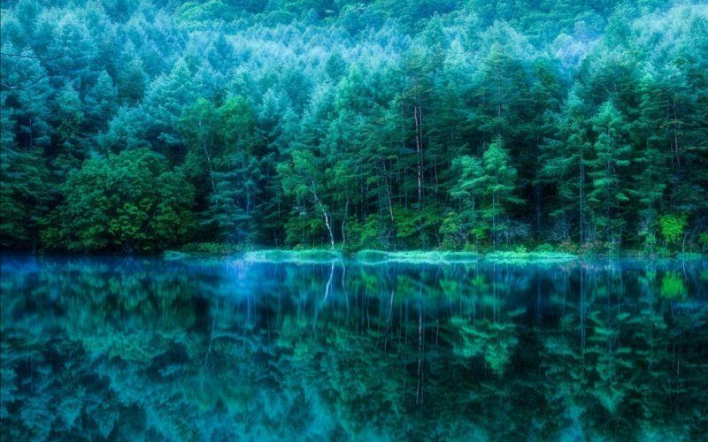 forest tree landscape nature lake fog reflection mirror wallpaper