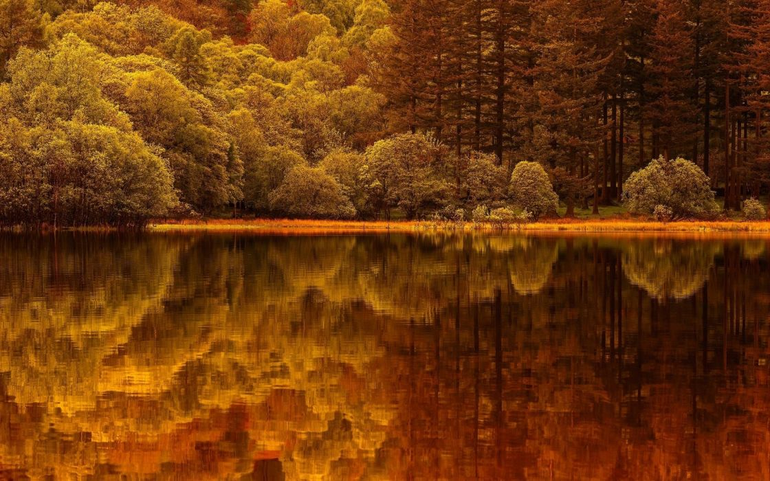 forest tree landscape nature autumn lake reflection wallpaper