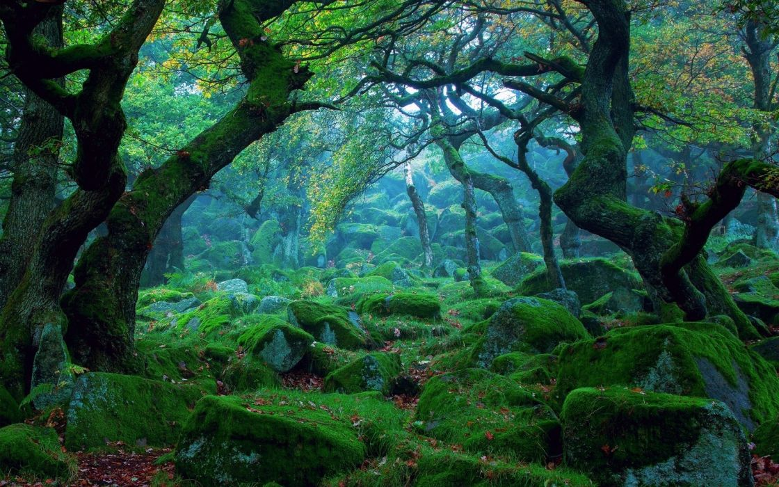 forest tree landscape nature grass moss wallpaper