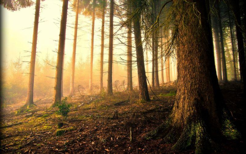forest tree landscape nature fog wallpaper