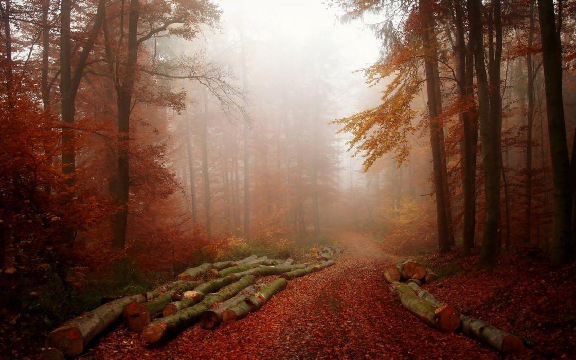 Forest Tree Landscape Nature Autumn Path Fog Road Wallpaper