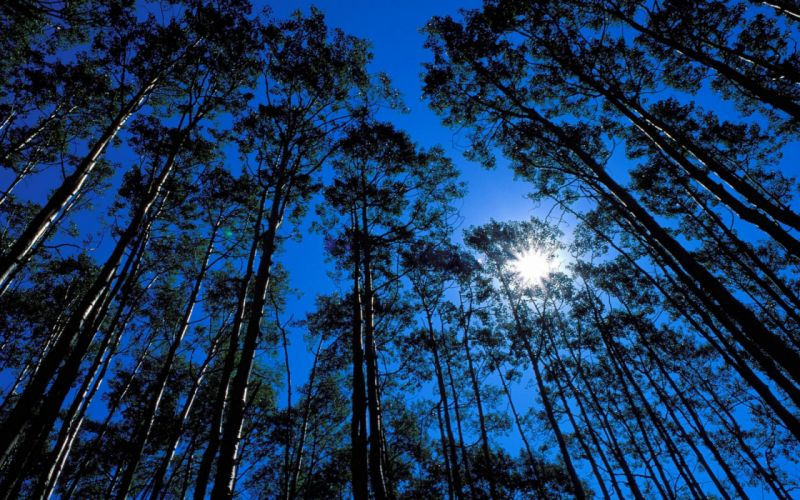 forest tree landscape night moon wallpaper