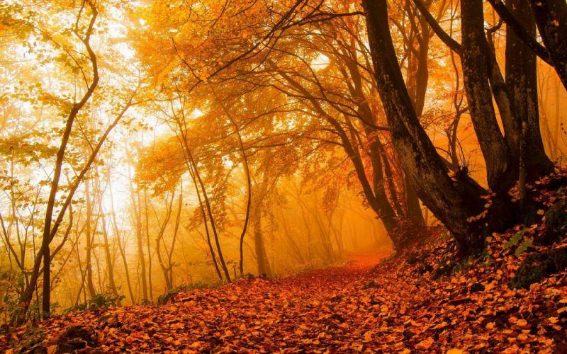 forest tree landscape nature autumn path wallpaper
