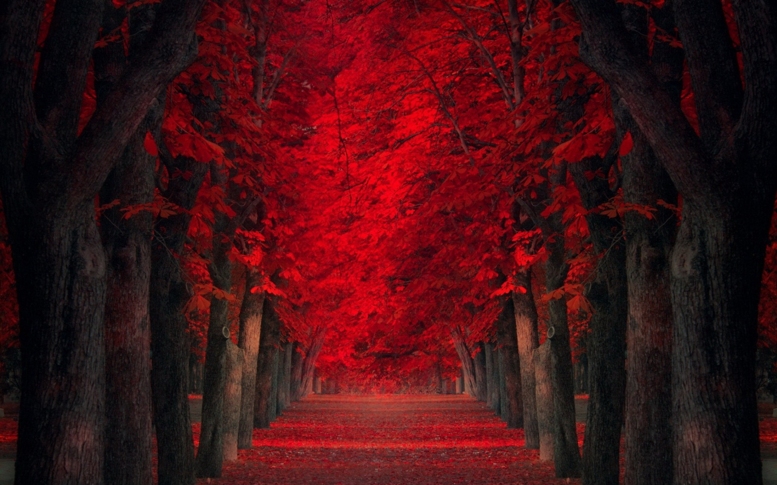red landscape wallpapers for desktop - photo #12