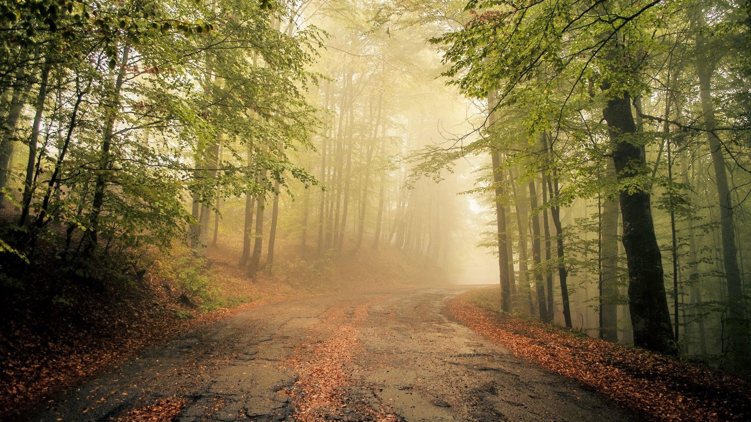 Droga w lesie - 1 part 5