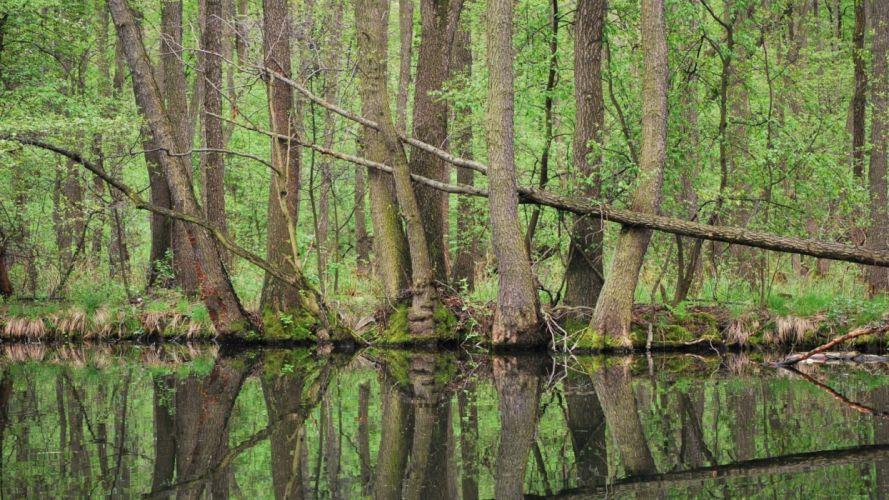forest tree landscape nature lake river wallpaper
