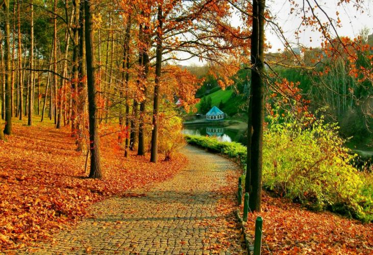 autumn-in-park-nature wallpaper