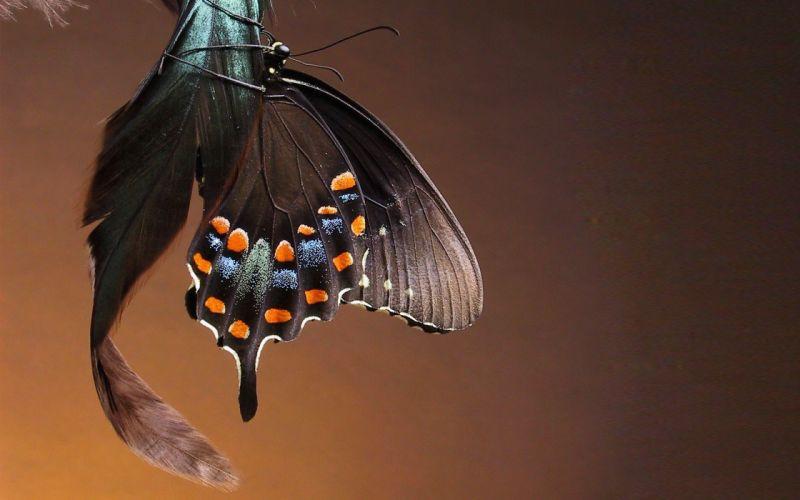 macro butterfly beauty beautiful wallpaper