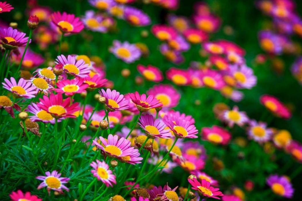 little-flowers-field- wallpaper