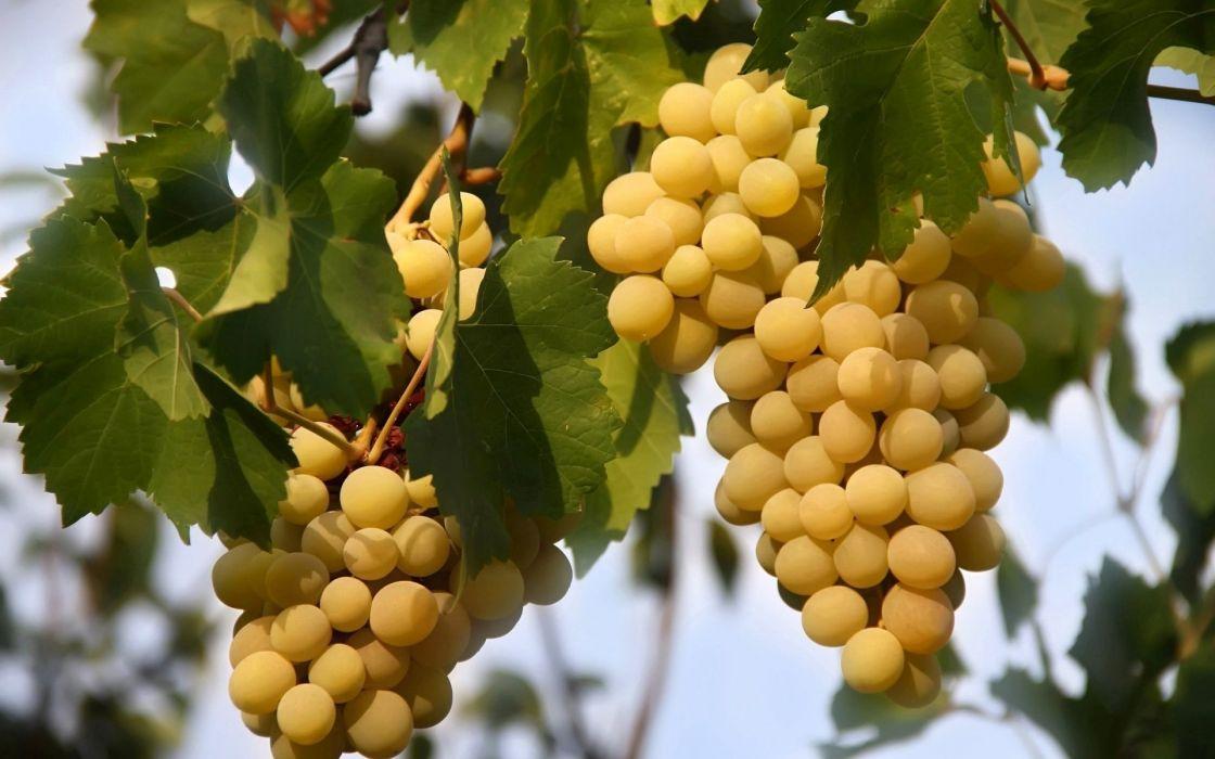 white-grapes wallpaper