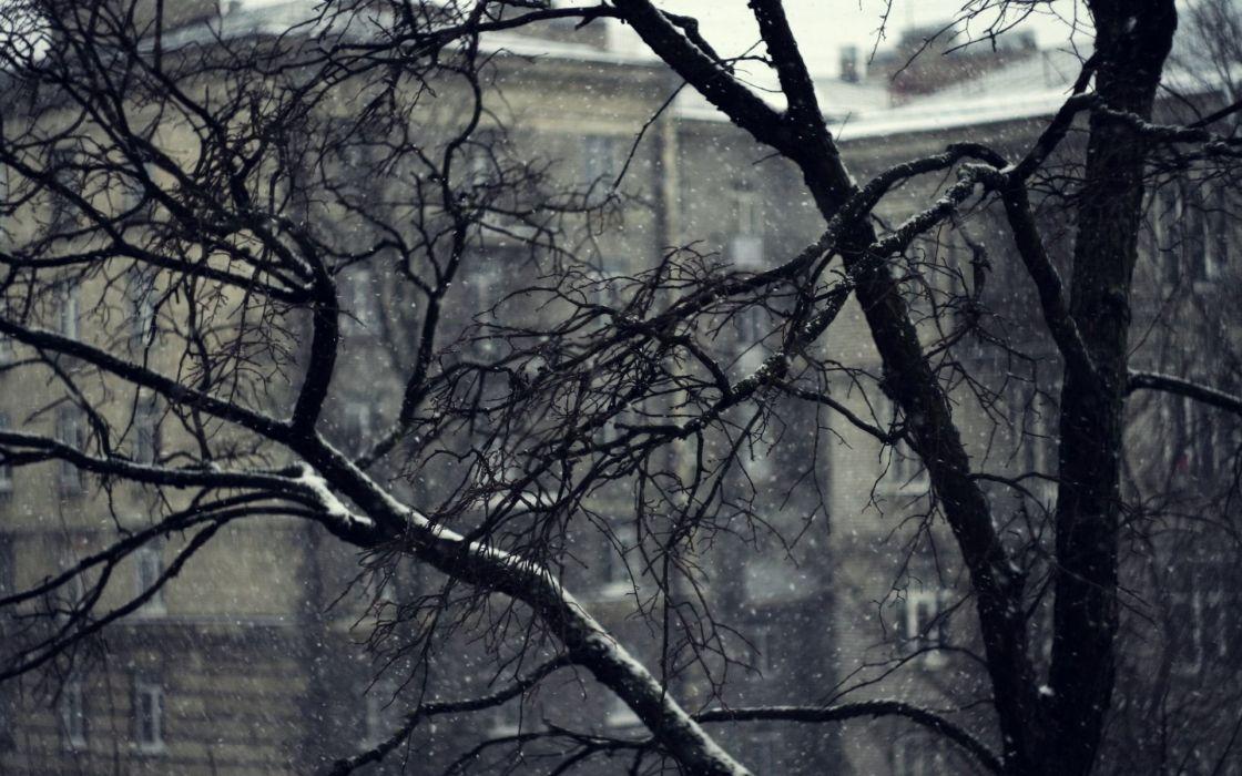 Nature Winter Snow Tree wallpaper