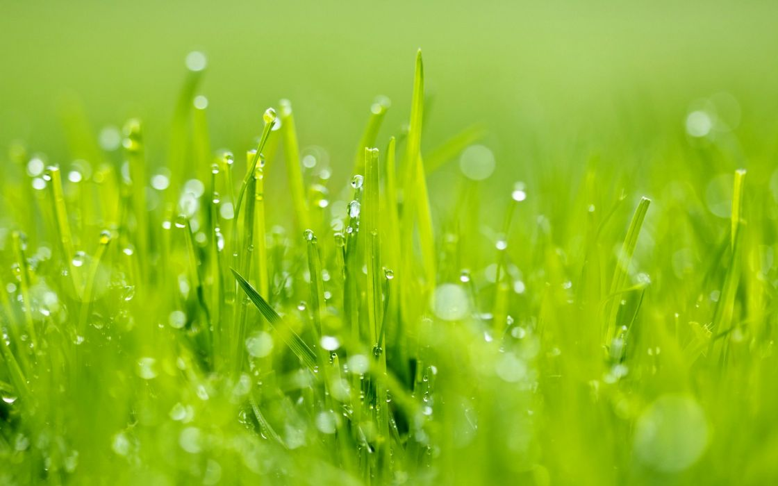 grass nature green rain wallpaper