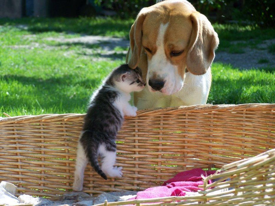 Cute Animal Dog Cat Baby Kitty Wallpaper 1600x1200 680519
