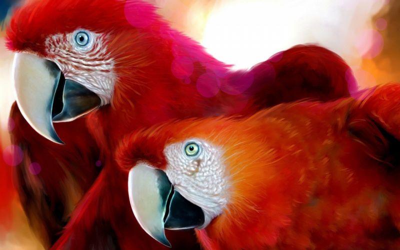 scarlet-macaws-animal birds red wallpaper