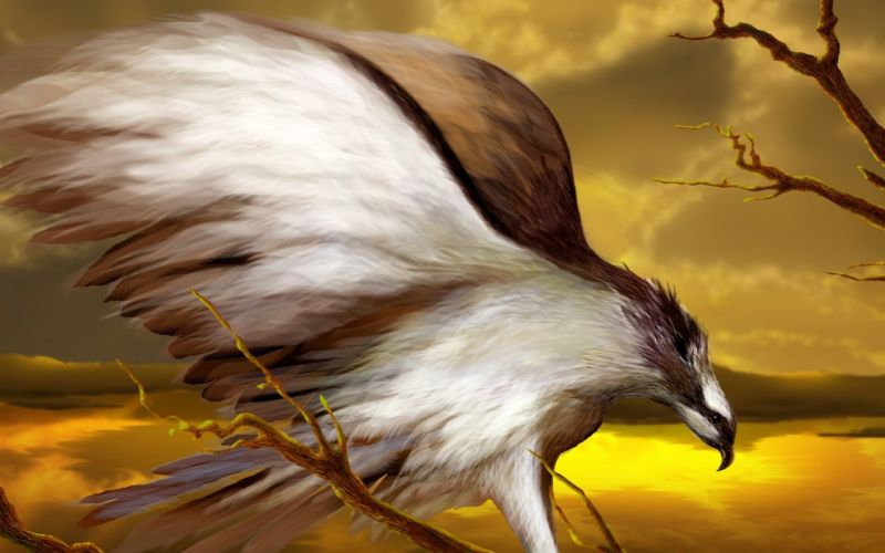 eagle-art animal wings wallpaper