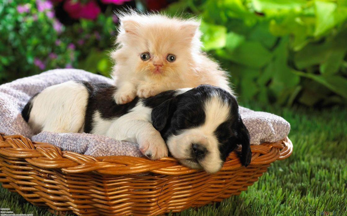 Cute Friend Cat Dog Baby Wallpaper 1920x1200 680546 Wallpaperup