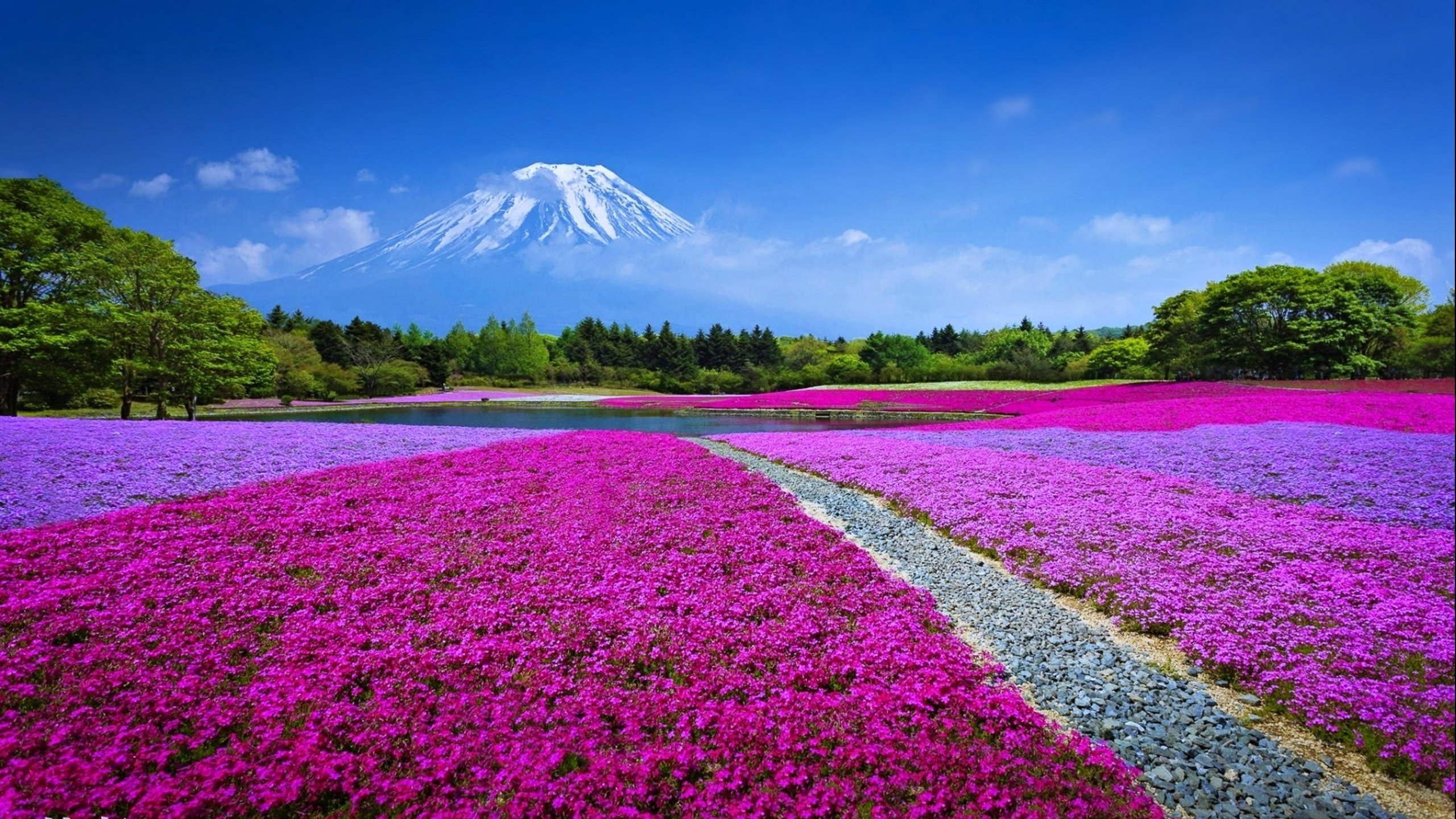 flower flowerrs nature landscape wallpaper 2560x1440