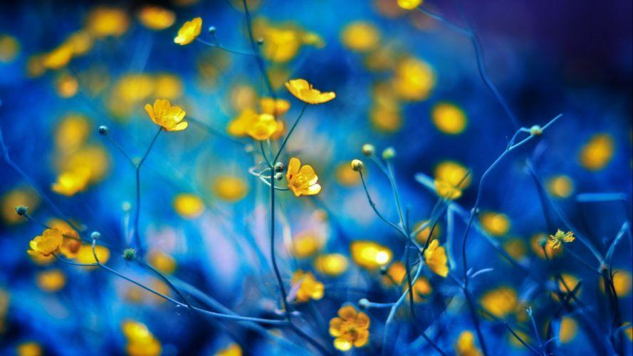 flower flowerrs nature landscape wallpaper