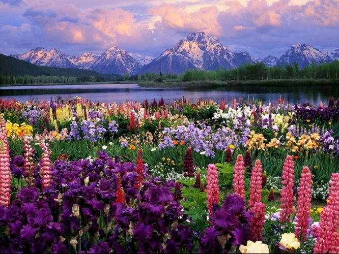 flower flowerrs nature landscape wallpaper