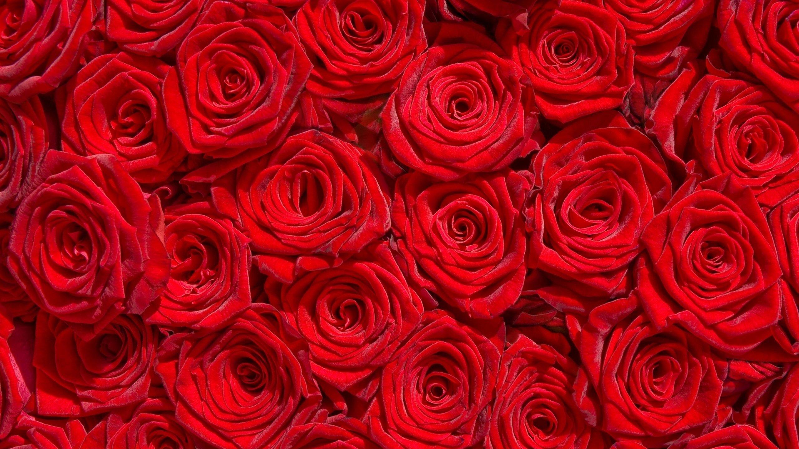 High Resolution Wallpaper Hd Nature Flower Rose