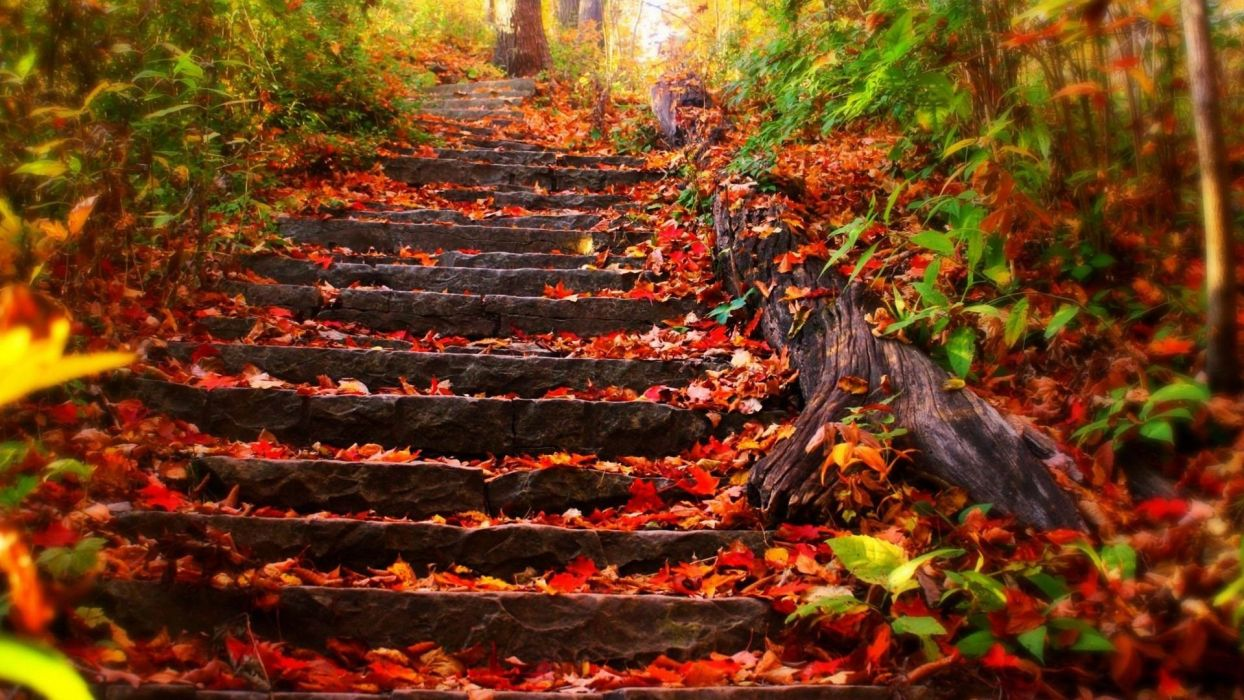 nature leafs autumn beauty landscape wallpaper