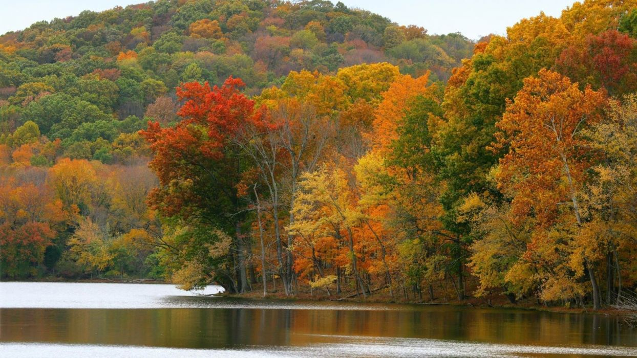 nature leafs autumn beauty landscape lake wallpaper