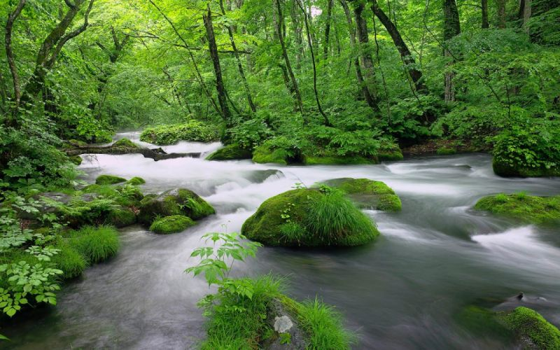beauty nature river forest tree wallpaper