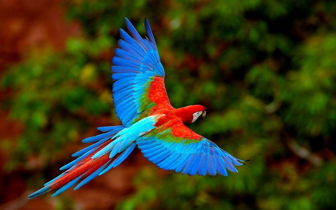 parrot beautiful bird colors wallpaper