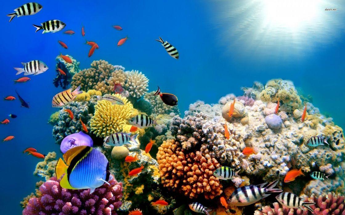 beautiful-fish-ocean wallpaper