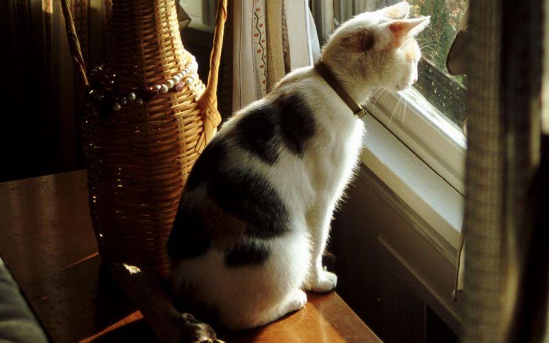 cute cat look window wallpaper