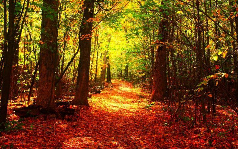 orange-leaf- Nature Tree Forest Autumn Fall wallpaper