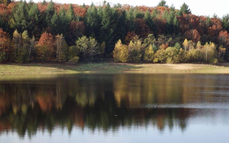 Nature Sky Tree Lake Autumn Fall wallpaper