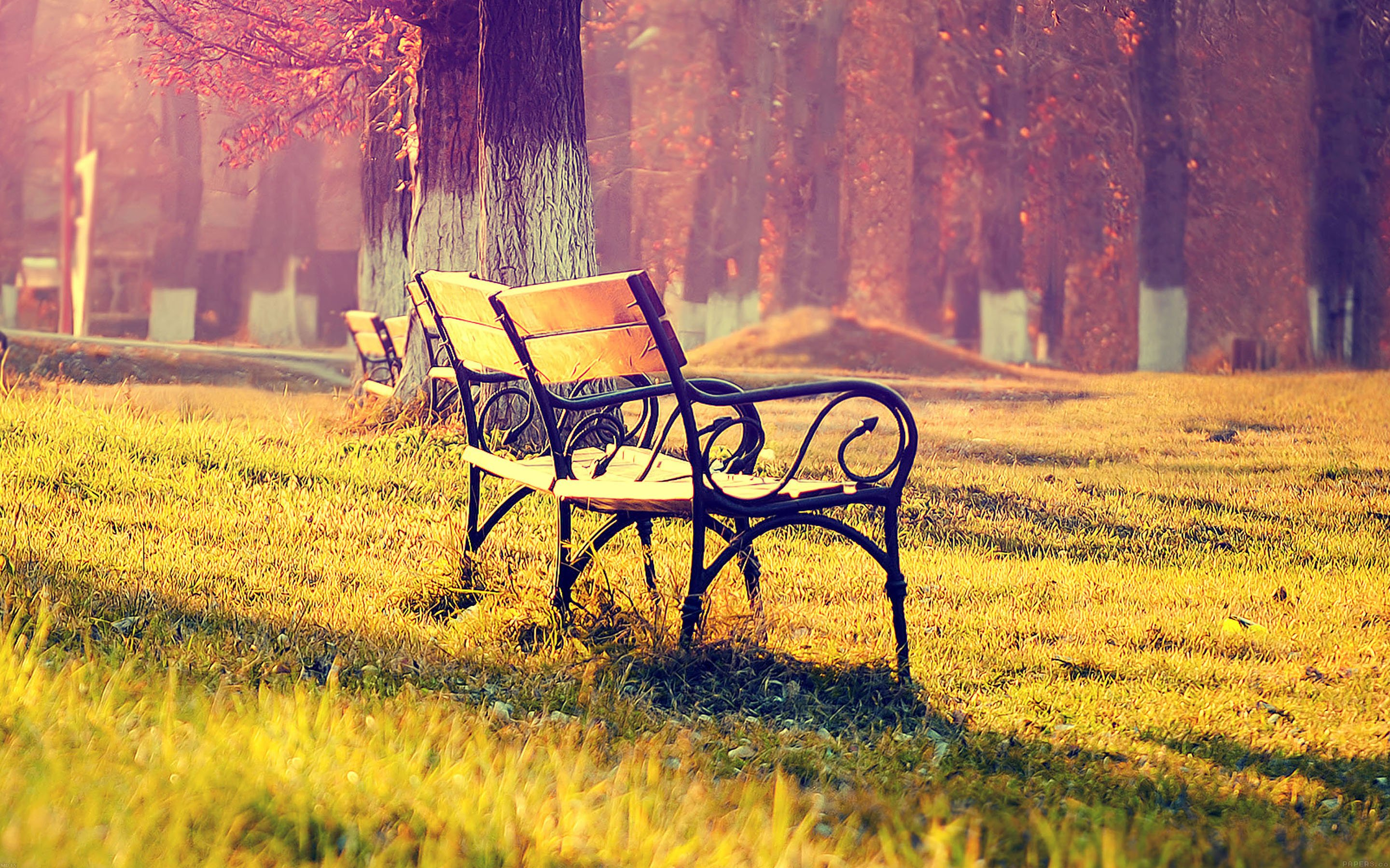 Fall Park Chair Lonely Nature Wallpaper