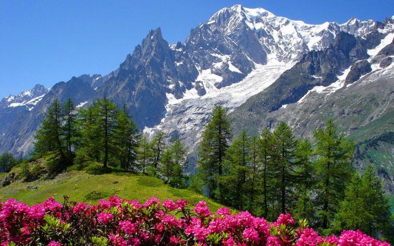 nature snowy mountain snow flower wallpaper
