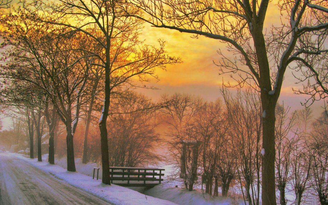 winter-snow-trees-nature-wooden wallpaper
