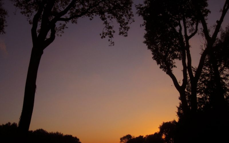 sun-clouds-skies-sunset-tree wallpaper